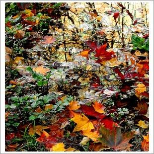 Почему осенью желтеют листья
