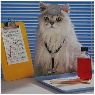 Умеют ли кошки лечить